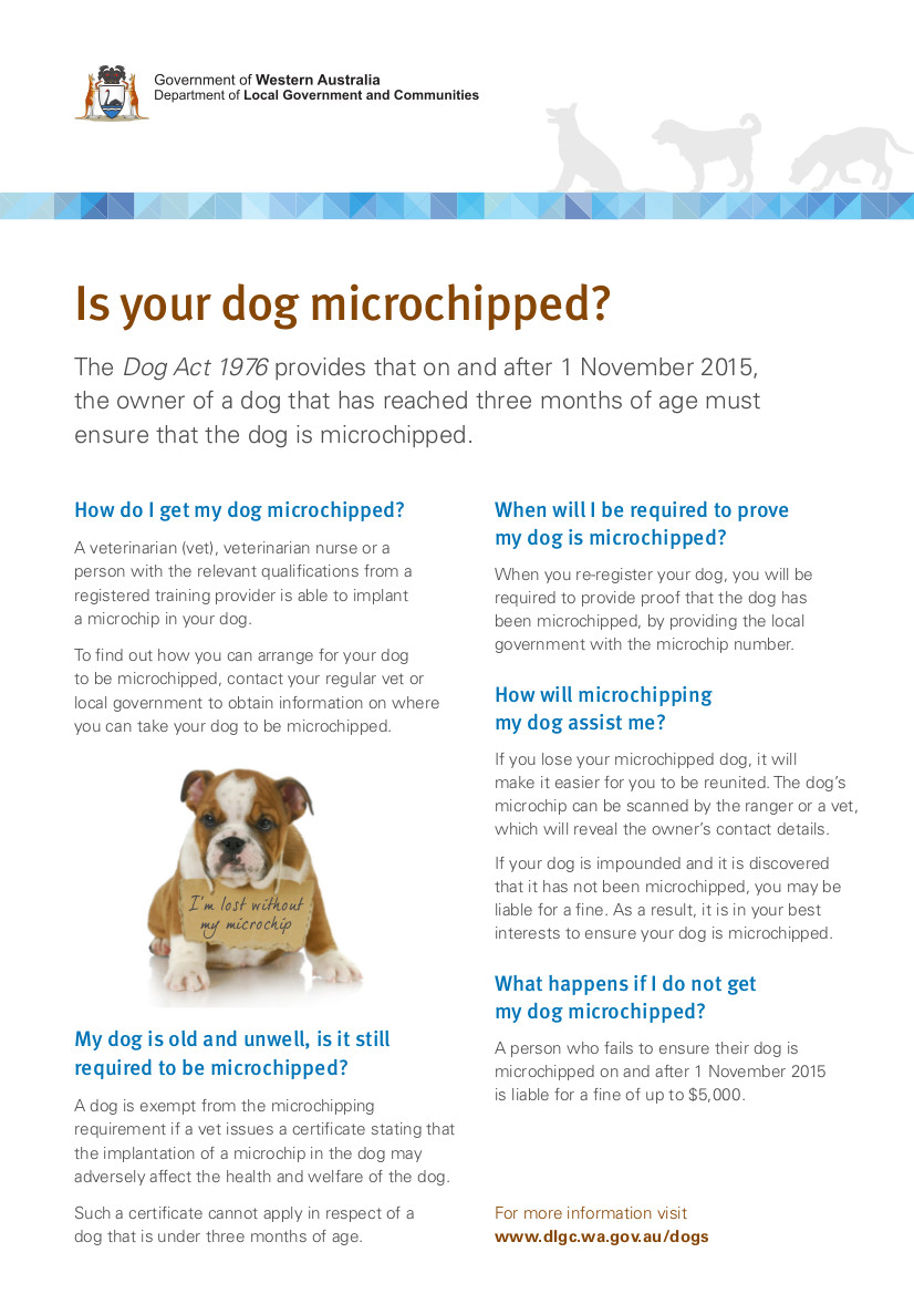 Is Your Dog Microchipped
